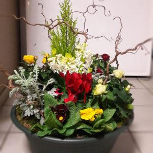 Coupe de plantes