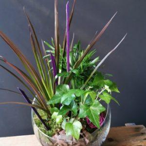 Trio de plantes verte (Violet)