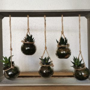 Cadre de plantes grasses