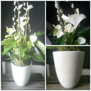 Anthurium Blanc et son cache pot